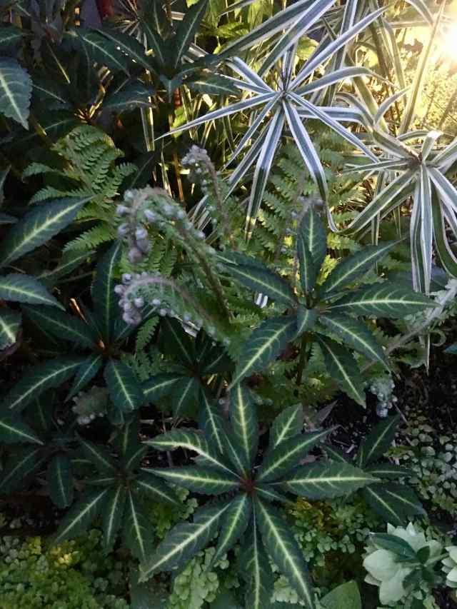 Impatiens, carex, and ferns